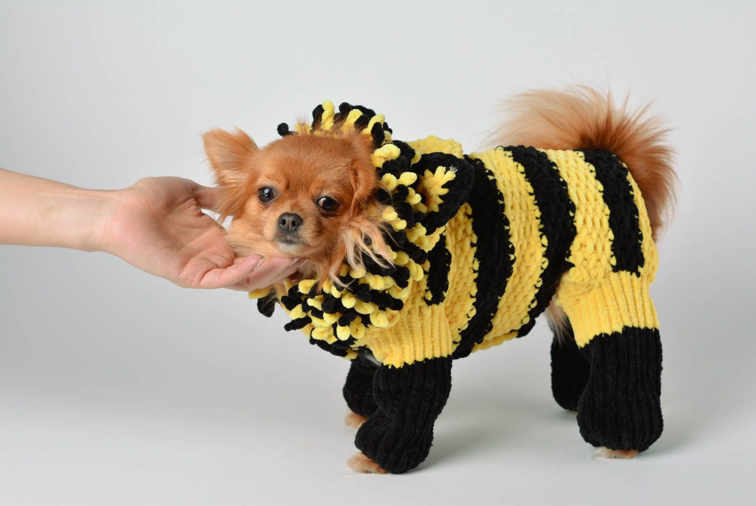 Handmade knitted suit for dogs bright designer clothes for pets cute accessory photo 2