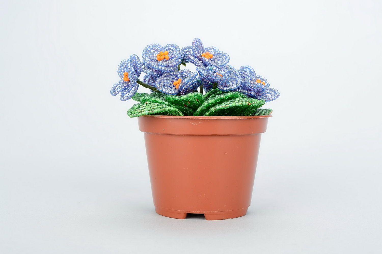 Beaded violet in pot photo 3