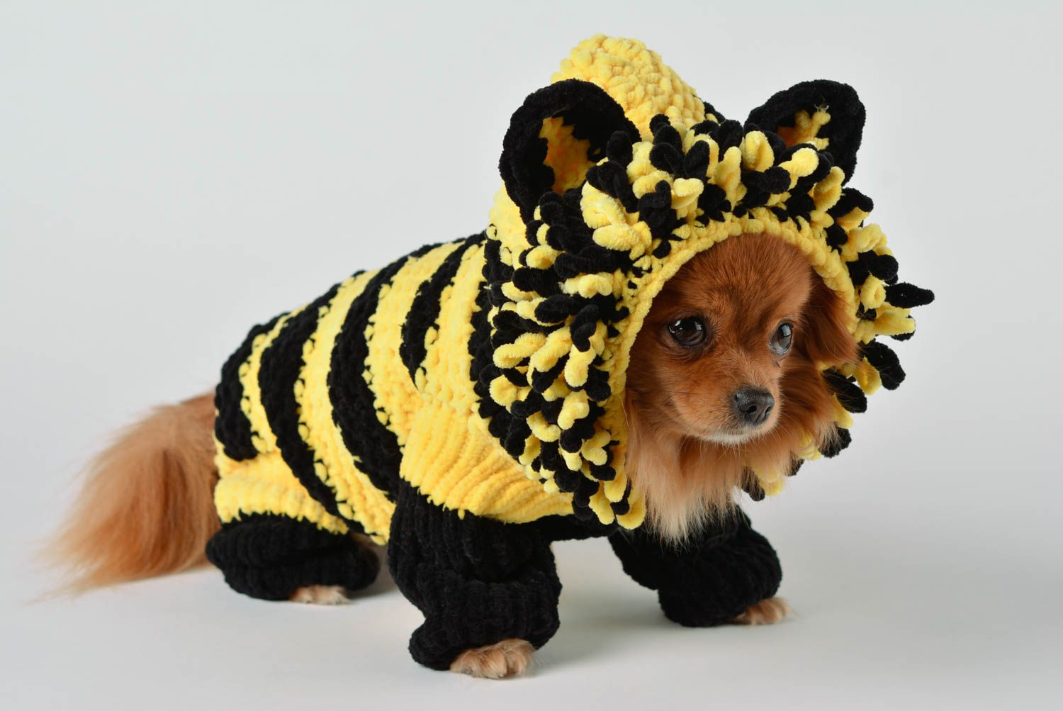 Handmade knitted suit for dogs bright designer clothes for pets cute accessory photo 1