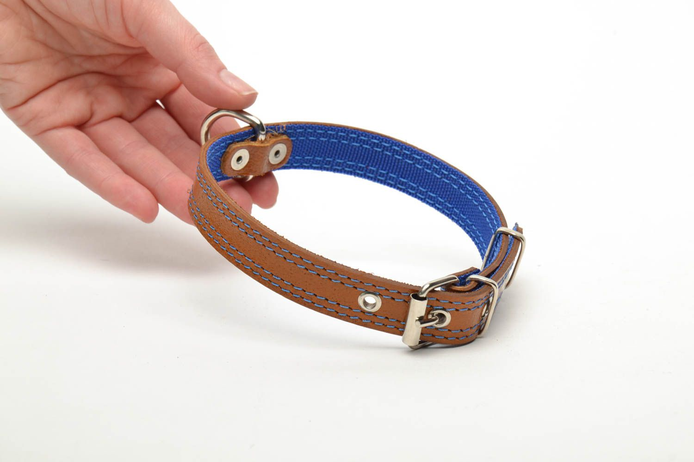 Designer dog collar photo 5