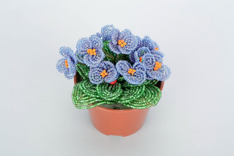 Beaded violet in pot photo 1