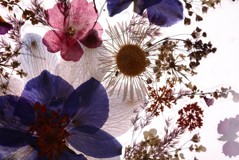 madeheart petit tableau avec fleurs s ch es fait main. Black Bedroom Furniture Sets. Home Design Ideas