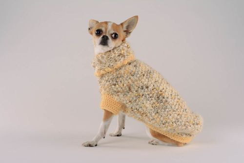 Sweater for dogs Banana Republic - MADEheart.com