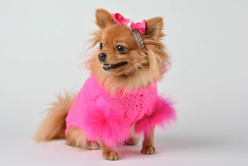 Handmade unusual bright clothes for pets designer accessory knitted suit for dog - MADEheart.com