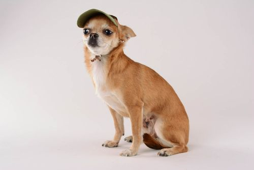 Cap for a dog Military - MADEheart.com
